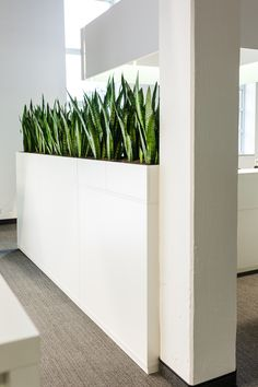 Sideboards: puristic greenery in the office, eye-catcher and privacy at the same time - room divider ideas - Trend Innen Pflanzen 2020 Wooden Vase, Wooden Diy, Office Interior Design, Office Interiors, Interior Modern, Best Office, Cool Office Space, Small Office, Privacy Plants
