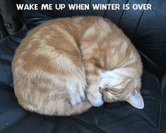 Cats, Winter, Animals, Winter Time, Gatos, Animales, Animaux, Animal, Cat