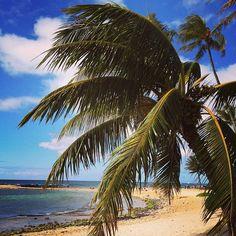 Poipu, Kauai,Hawaii ...where I want to be now!!!