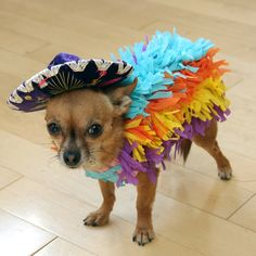 All dogs are adorable. But there's something about one wearing a DIY disguise that makes our hearts melt, like these tail-wagging Halloween costumes.: A Pinata Dog Costume Diy Dog Costumes, Pet Halloween Costumes, Animal Costumes, Theme Halloween, Dog Halloween, Unique Costumes, Costume Ideas, Dog And Owner Costumes, Chihuahua Costumes