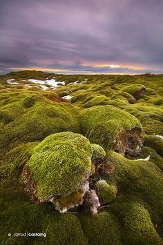 Sunset over moss covered lava fields, South Coast, Iceland.