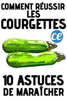 10 market gardening tips for growing beautiful zucchini. Potager Garden, Balcony Garden, Herb Garden, Vegetable Garden, Garden Plants, Growing Zucchini, Diy Greenhouse, Green Nature, Horticulture