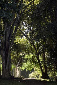 The Royal Botanical Garden, Peradeniya, Kandy, Sri Lanka (www.secretlanka.com) Flora And Fauna, Kandi, Botanical Gardens, Sri Lanka, Green, Holiday, Nature, Adobe, Plants