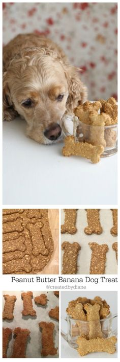 homemade dog cookies are easy and healthy for you dog to snack on