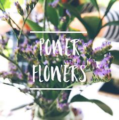 """Using a classic spin on the early """"flower power"""" era, I went and investigated the power of flowers. Teenage Daughters, Flower Power, Flowers, Plants, Blog, Writing, Blogging, Plant, Royal Icing Flowers"""