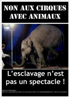 Non aux cirques avec animaux. L'esclavage n'est pas un spectacle !