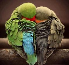 From Amazing Animal Facts: No, they are actually called so...Lovebird is the name given to species of parrot that display deep loving feelings and look after their mates. They form very strong relationships with members of their flock, which is why they are named so.