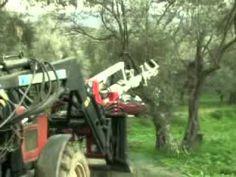 ▶ Η Ελιά στο χώρο και στο χρόνο - YouTube Olive Tree, Outdoor Power Equipment, Youtube, Gardening, World, Fall, Crafts, Autumn, Manualidades