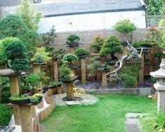 StreamLinkcom Bonsai garden