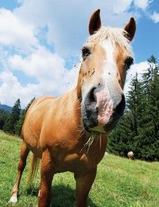 Vesicular Stomatitis Horse Health Guide | Horse&Rider