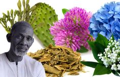 Dr. Sebi (Alfredo Bowman) is a pathologist, herbalist, biochemist, and naturalist who has a lot of experience healing people using herbs, organic foods, and alternative medicine. In some of his lec…