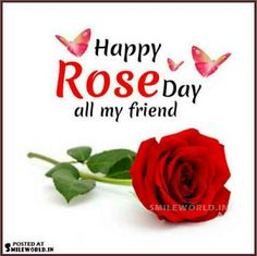 Friends Day, Valentine Special, Festivals, Rose, Flowers, Pink, Concerts, Roses, Royal Icing Flowers