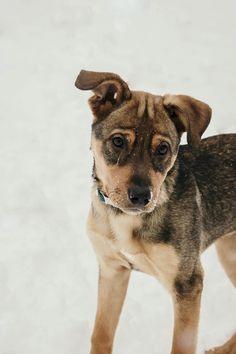 Adorable mixed breed Adorable mixed breed puppy playing in the snow. Madison R . Puppy Care, Dog Care, Puppy Play, Rottweiler Puppies, Dog Behavior, Image Hd, Dog Photos, Dog Pictures, Training Your Dog