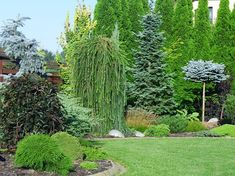 Inšpirácie pre moju (tvoju) záhradu ;) - Modrástrecha.sk Yard, Plants, Patio, Plant, Courtyards, Garden, Planets, Court Yard