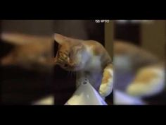 """LOL Funny Fails Cat Trying To Drink Steam - http://positivelifemagazine.com/lol-funny-fails-cat-trying-to-drink-steam-2/ http://img.youtube.com/vi/yFDH0PXM4DQ/0.jpg *Today Special Deal*  LOL Funny Fails Cat Trying To Drink Steam LOL Funny Fails Cat Trying To Drink Steam LOL Funny Fails Cat essayant de boire de la vapeur LOL Funny Fails … *Today Special Deal* Please follow and like us:  var addthis_config =   url: """""""",  title: """""""""""