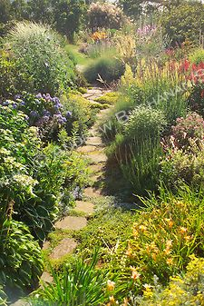 The Pacific Northwest receives surprisingly little rainfall in the summer, so gardens need plants that can withstand long sunny, dry spells....