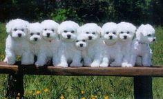 Cute multiplied