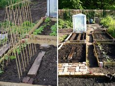 Allotment tips for getting yours started this year or growing your own - Flo's top 5 veg for patios and gardens.
