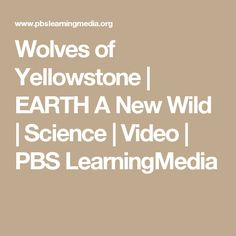 Wolves of Yellowstone | EARTH A New Wild | Science | Video | PBS LearningMedia