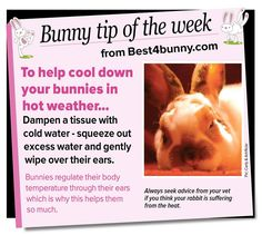 Bunny tip - Helping to  cool them down