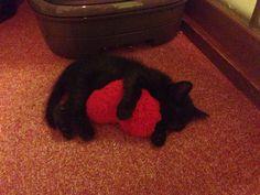 ♥️と #Cat #Baby #子猫 #黒猫 #白猫