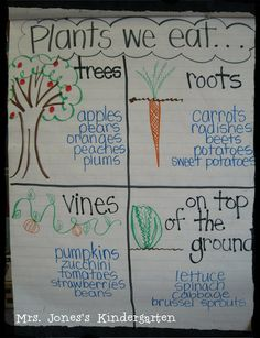 Plants we eat anchor chart