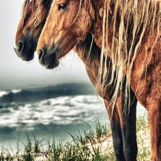 2013 ‹ Sable Island Horses