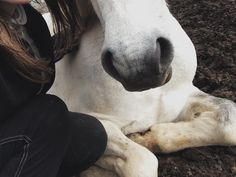 home is where the horse is : Photo