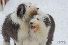 Puppy+gathering