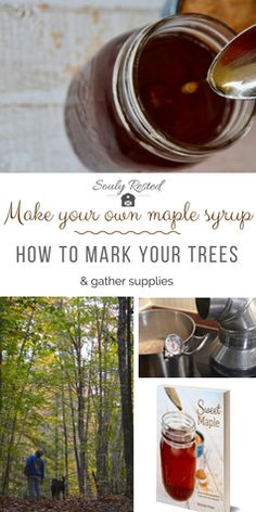 #DIYMapleSyrup | backyard maple syrup | tapping trees | maple trees | farm to table | sustainable living | homesteading
