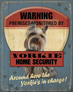 Wild Wings 'Warning Yorkie Home Security' Wall Sign Yorkies, Yorkie Puppy, Can Dogs Eat Corn, Teacup Yorkie, Silky Terrier, Yorkshire Terrier Puppies, Terrier Dogs, Little Dogs, Dog Life