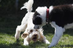 Your dog will never learn if you are tensed while #training him. Both you and your #dog need to be in an absolute relaxed state of mind before you begin any kind of training. This will help him #learn #faster.
