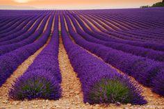 Provence, France. MIjn favoriet in Frankrijk...  Lavender field by Tomáš Vocelka on 500px