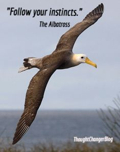 Life Lessons From an Albatross