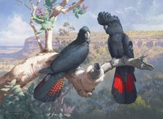 """""""Above The Gorge"""" by William T. Cooper Limited edition print available from Landsborough Galleries"""