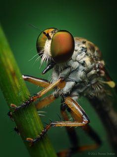 Stunning Macro Photography By Thomas Shahan | Art & Design  #Art #Arthropods #Bugs #Design #Flickr #Insects #MacroPhotography #Photography #ThomasShahan