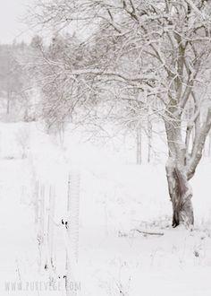 winter's hush...