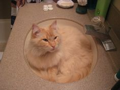 My cat Dizzy was cuter when he slept in the bathroom sink. Too bad that was before digital cameras.