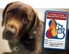 National Pet Fire Safety Day | The Bark