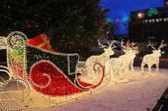 Santa's sleigh, all those Christmas lights-wow! Christmas Lights Outside, Xmas Lights, Decorating With Christmas Lights, Outdoor Christmas, Christmas Decorations, Merry Little Christmas, Christmas And New Year, Winter Christmas, Santa Sleigh