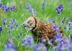 Owl-Smells-the-Flowers