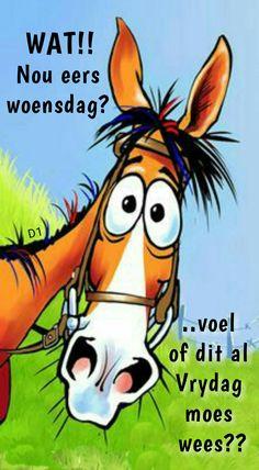 voel of dit al Vrydag moes wees? Emoji Pictures, Funny Pictures, Lekker Dag, Wacky Wednesday, Afrikaanse Quotes, Goeie Nag, Goeie More, Good Morning Good Night, Videos Funny