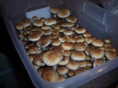 This is a thread which has various techniques showing how to grow magic mushrooms. Very useful for anyone interested (and where legal).