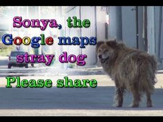 Sonya the Lost Dog Was Found Using Google Maps. Bring a Tissue to This Video.