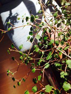 Zic-zac träd