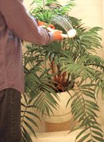 Add years to your houseplants with these simple cleaning tips