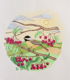 From the book Chickadee colouring book by Robert Roskam. Colouring, Adult Coloring, Coloring Books, Art, Bird Drawings, Butterflies, Mandalas, Adult Colouring In, Vintage Coloring Books