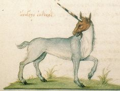 A French illustration of a unicorn c.1564