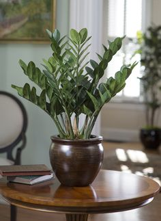 ZZ Plant Zamioculcas or ZZ  fits just about every need,handles low light, low water requirements,tough under indoor conditions.