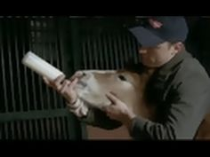 Budweiser - Horse Story. This makes me bawl like a baby EVERY single time!!